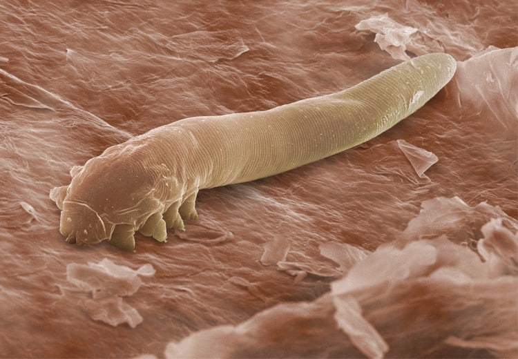 These mites are likely on your face right now!