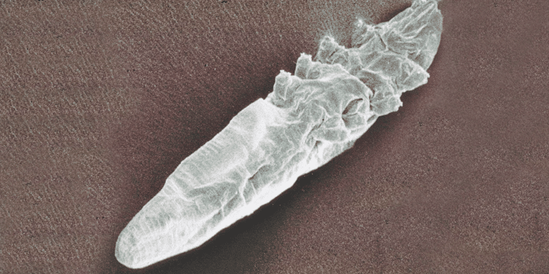 Demodex brevis: Treatments and prevention